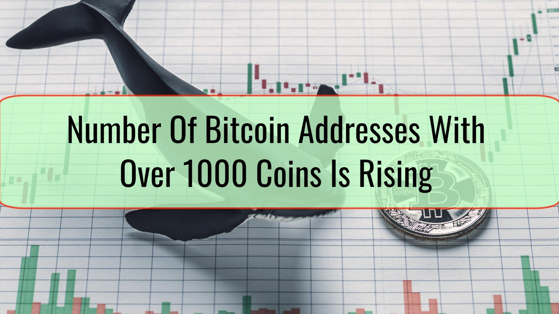 Number Of Bitcoin Addresses With Over 1000 Coins Is Rising